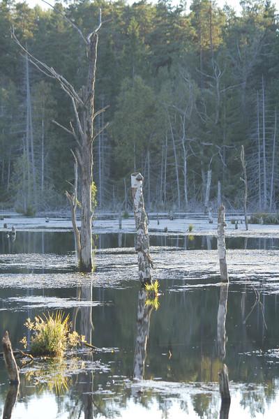 Jordbrodammen - Vaxholm