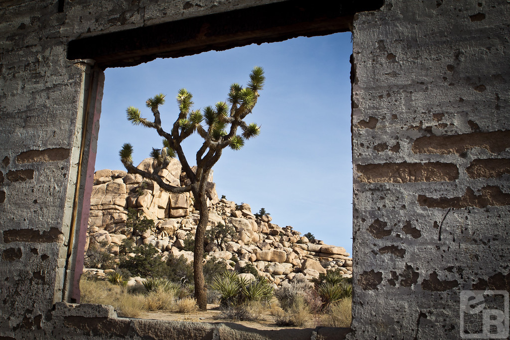 Joshua tree viewed through the remains of Uncle Willy's Health Food Store. Joshua Tree National Park, California