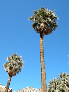 Some palms had been denuded of their thatch, probably by fire.