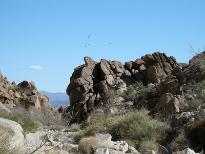 A few ravens wheel above one of several constrictions in the lower section of Lost Palms Canyon.