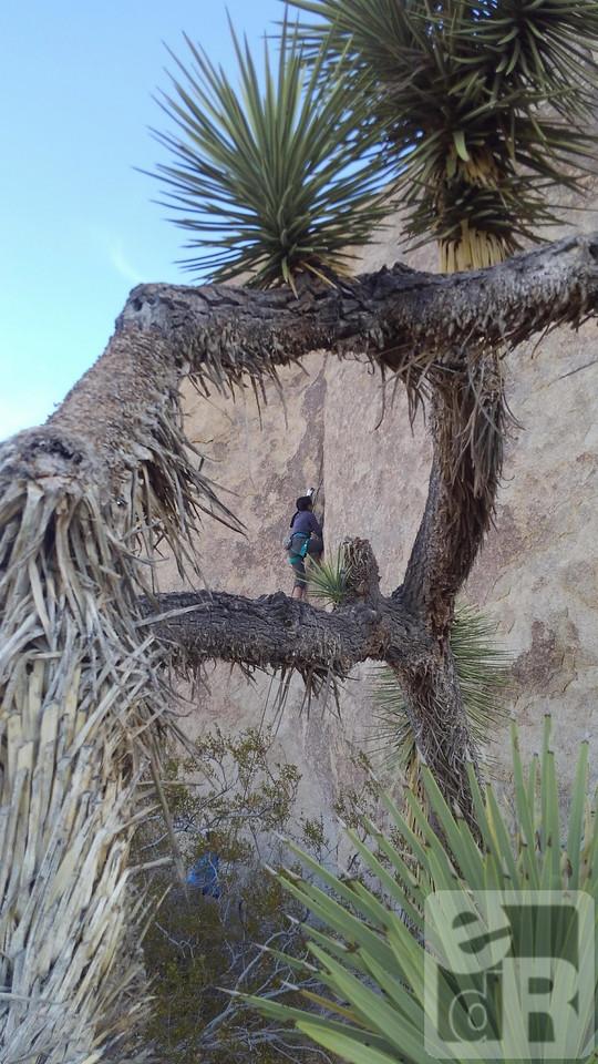 "Eileen ""Rockgrrl"" climbing, John Long belaying"