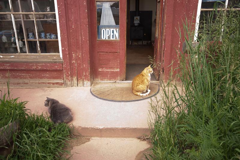 kitties out for a sun bath