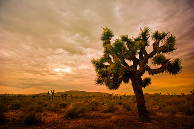 Joshua Tree - July 15th, 2010