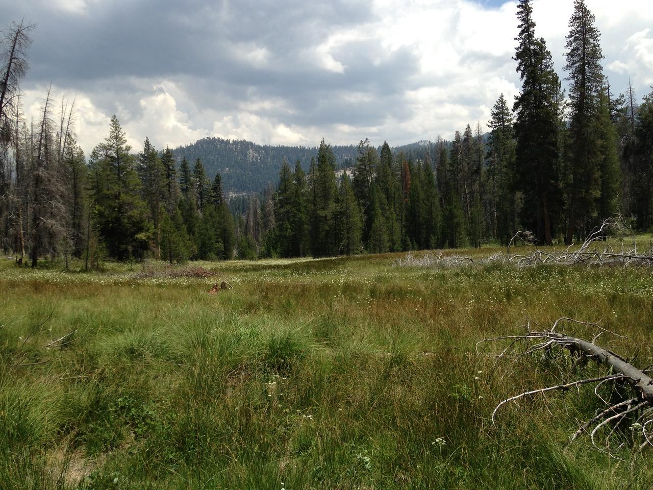 A lush un-named meadow.
