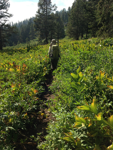 On the west side of the gap, you immediately plunge into a lush flower-garden. The contrast to the drier and more forested east side of the gap is quite distinct.