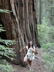 Lady M does tree posture. The Sequoias are really good at that pose,