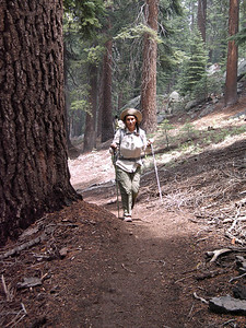 A nicely-graded and maintained trail. Having two walking sticks on an upgrade seems to help.