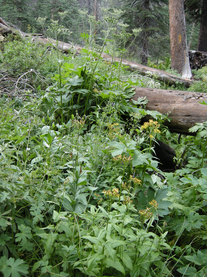 A streamside profusion of plants and flowers.