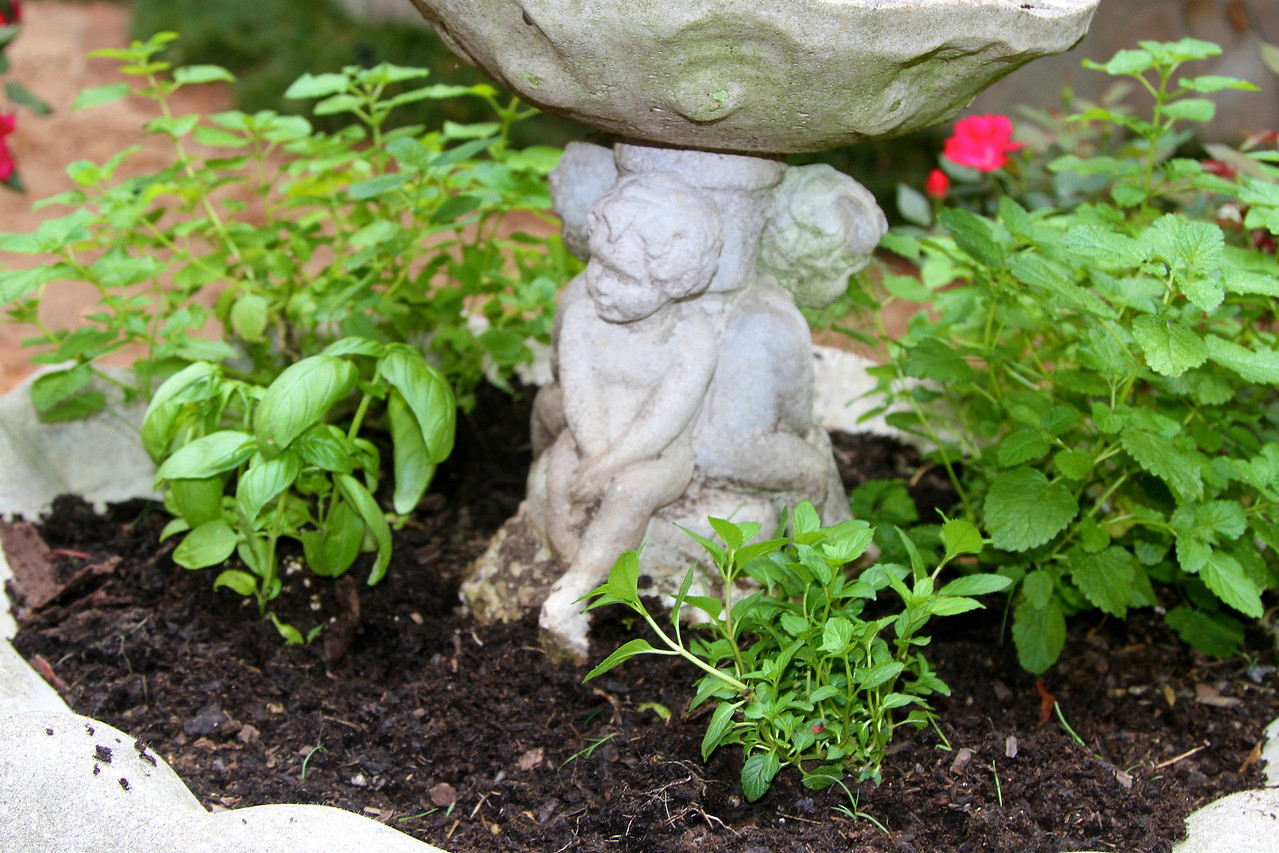 6/22 - My new Herb Garden! Dee started me out by planting fragrant lemon balm in this old fountain, and today I added basil, peppermint, and dill. Perfect use for the fountain.