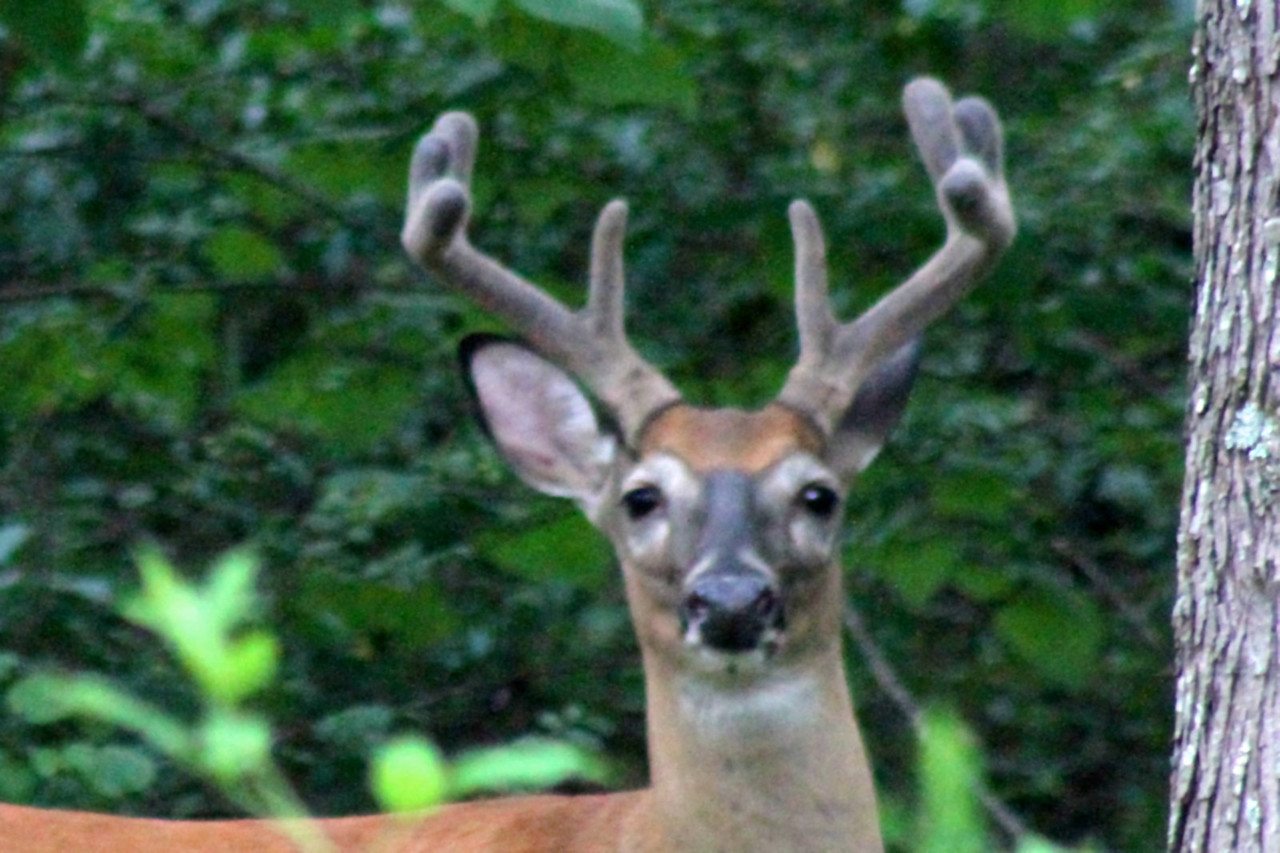 Closeup of my deer friend