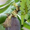 Bee and Banana