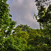 Monsoon afternoon in the Jungle