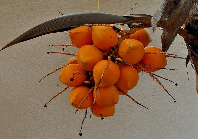 The Poco Loco Coconuts