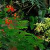 Poco Loco Jungle