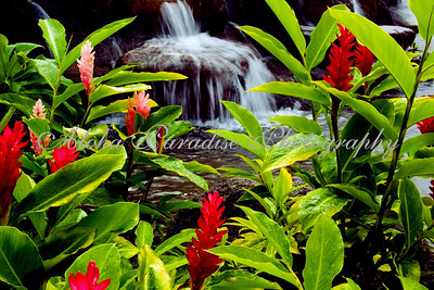 GINGER FLOWERS & WATERFALL