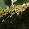 Moss on a tree branch.