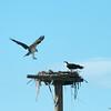 KY Osprey 6-12 2