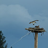 KY Osprey Nest, April 13th 5
