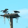 KY Osprey 6-12 3