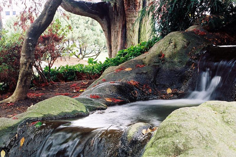 Taken November 24, 2005 at the Kaibara Park in Kent