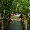 Entering into the Bamboo Garden