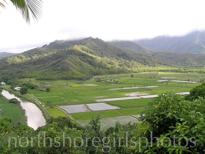 Hanalei Valley on a Normal Day