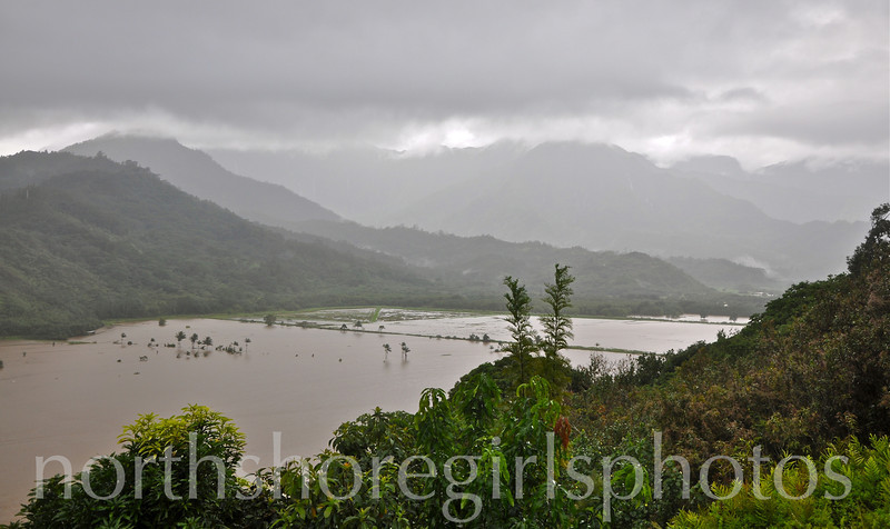 March 4, 2012 water as far as we can see.....Hanalei Valley Kauai