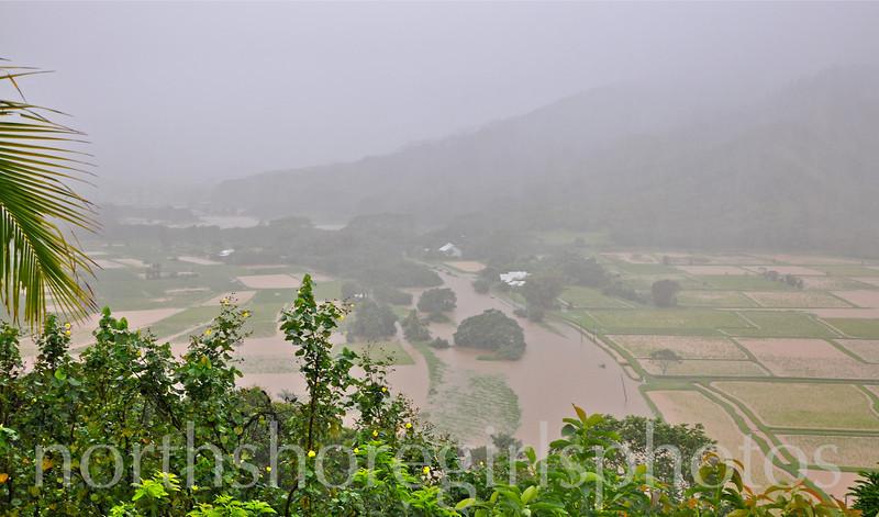 March 5, 2012 Hanalei valley