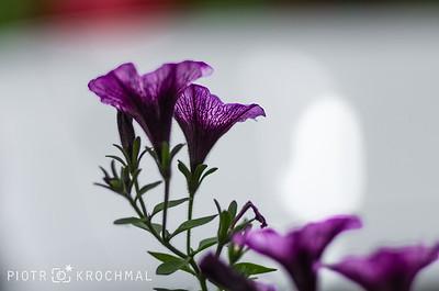 Purple clean