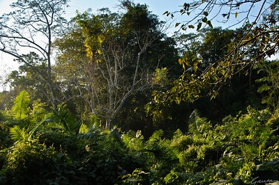 12: Kaziranga Forests 22 December 2011