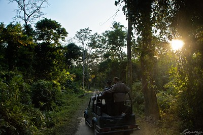13: Kaziranga Forests 22 December 2011