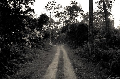14: Kaziranga Forests 22 December 2011
