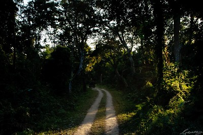 15: Kaziranga Forests 22 December 2011
