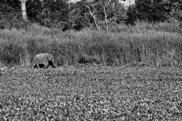 05: Kaziranga, Assam Catching up 22 December 2011