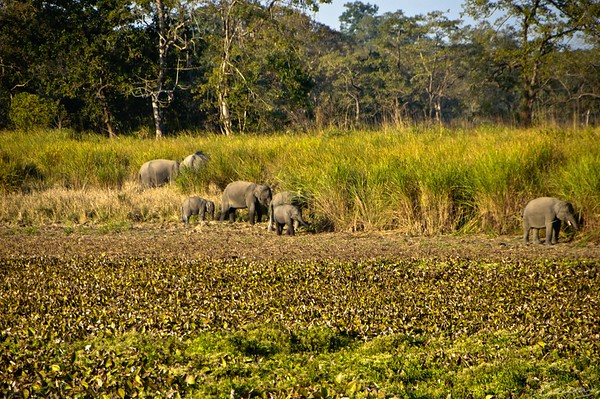 01: Kaziranga, Assam Elephant family 22 December 2011