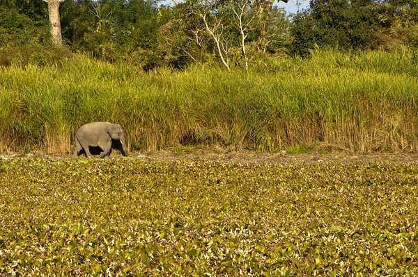 06: Kaziranga, Assam Catching up 22 December 2011