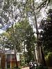 005 Nairobi Nat & Joy Compound KenyaTrip2013-02896