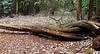 017 Nairobi Karura Forest KenyaTrip2013-02858