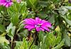 013 Nairobi flowers KenyaTrip2013-02844