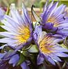 012 Nairobi flowers KenyaTrip2013-02017