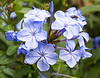 014 Nairobi flowers KenyaTrip2013-02848