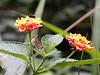 016 Nairobi Karura Forest flowers KenyaTrip2013-02857