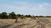 014 Giraffes KenyaTrip2013-00343