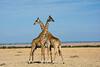 016 Grifaffes KenyaTrip2013-01509