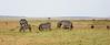 005 Zebras KenyaTrip2013-00977