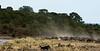 007 Zebras & Vultures KenyaTrip2013-01080