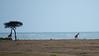 015 Giraffes KenyaTrip2013-00923