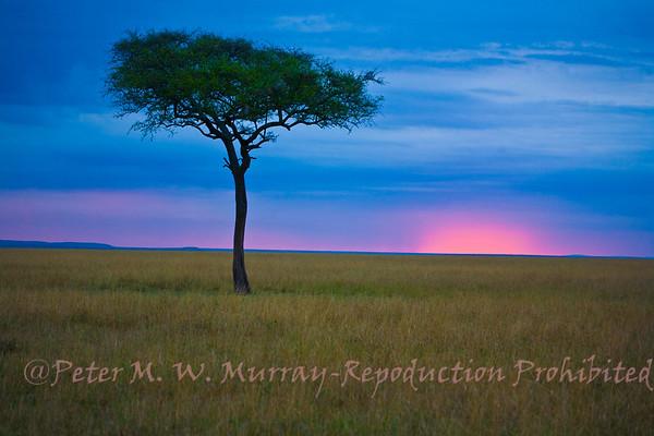 Kenya 2008