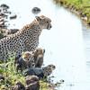 Malaika with cubs