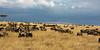 037 Wildebeast KenyaTrip2013-01280